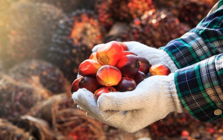 Olej Palmowy Ponownie W Ogniu Uwagi Konsumentów Paszport
